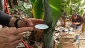 Conocer la demanda hídrica del cultivo